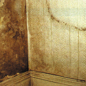 Damp can be unsightly and lead to problems later on.